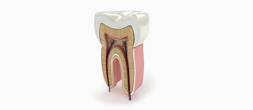 ENDODONŢIE - Dreossi dental