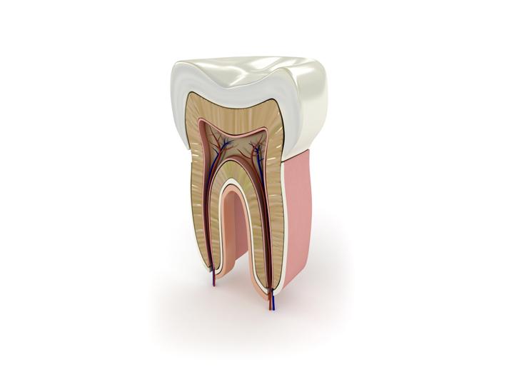 dinte - dreossi dental